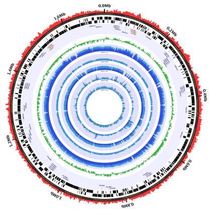 Sample Circleator image